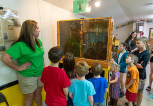 Bridgette Biering shows visitors and active bee hive.